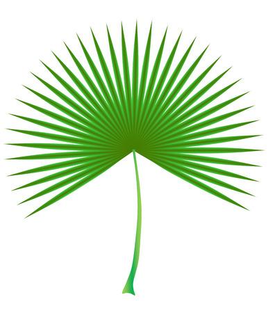 date palm leaf green circular
