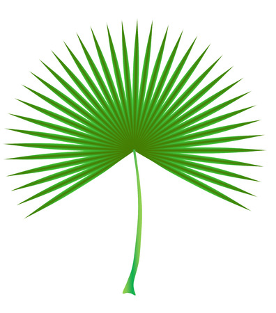 date palm leaf green circular