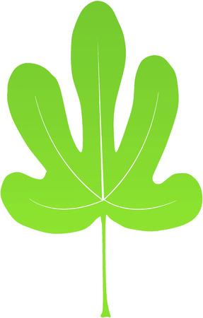calendula: green fig leave