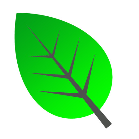 green leave icon symblol doque Stock Vector - 24902296