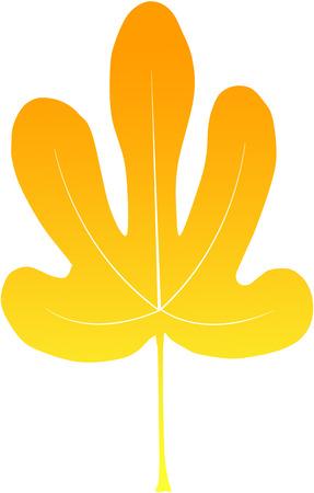 calendula: nice yellow fig leave