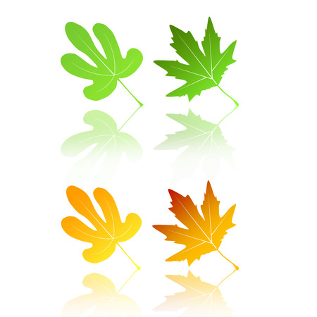 poplar chinar sycamore , plantain tree leaf symbolic leaf  2  Stock Vector - 24902300