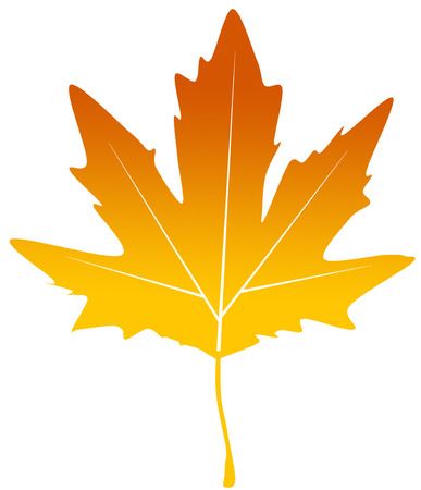 yellow poplar chinar leaf Stock Vector - 24902303