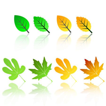 calendula: icon set collection leaves leaf green yellow poplar chinar sycamore plantain tree leaf symbolic leaf Illustration