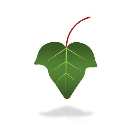 green ivy leaf illustration