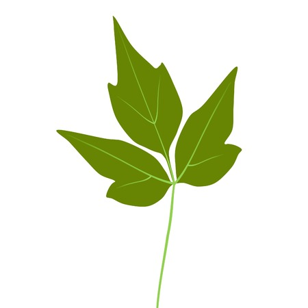 Green Eastern Poison Ivy leaf