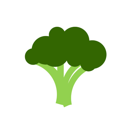 brassica: Broccoli cabbage vector. Illustration