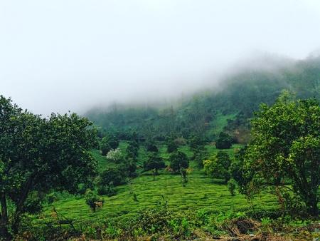 Nebel im Holz eine schöne Nebelwaldlandschaft Lizenzfreie Bilder
