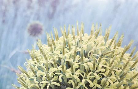 Blumenstrauß in einer Kugelform Lizenzfreie Bilder