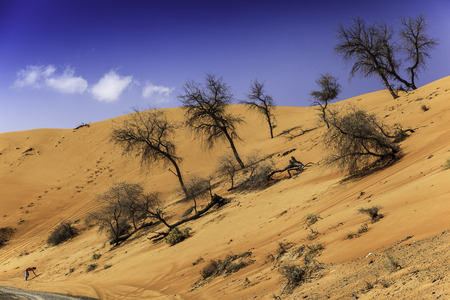 off track: A sand dune close to Wadi Maidaq, Fujairah, UAE in an off road track.