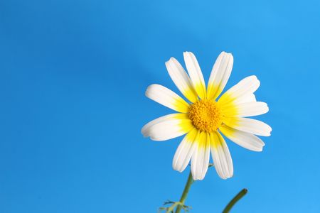 daisy background Stock Photo - 5712690