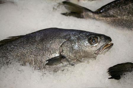 sparus: fish