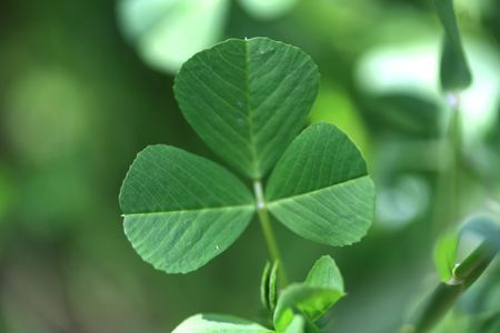 clover background Stock Photo - 5747480