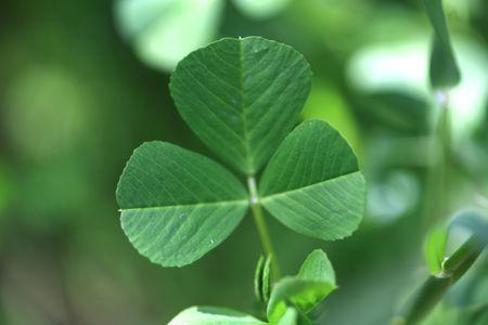 clover background Stock Photo - 5747480