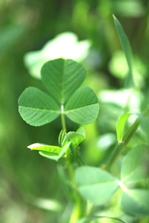clover background Stock Photo - 5747452