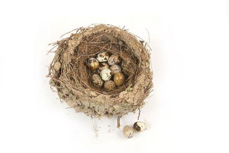 pigeon egg: egg background