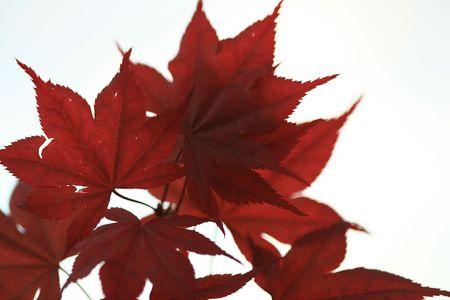 leaf background photo