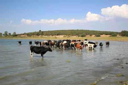beysehir lake photo