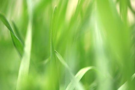grass Stock Photo - 6491491