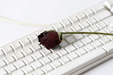 red rose and computer photo