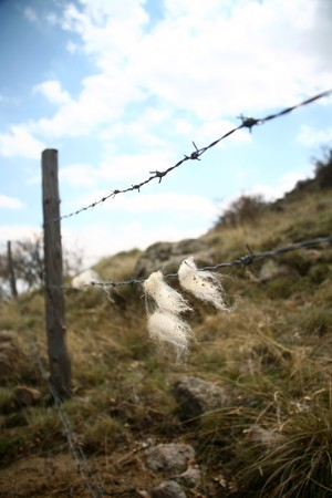 wire fence Stock Photo - 6907127