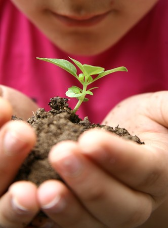 Seedlings in the hands of a girl image Stock Photo - 7033088