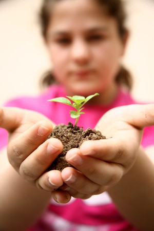 Seedlings in the hands of a girl image Stock Photo - 7033092