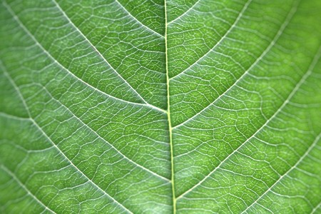 close-up images and details of a leaf photo