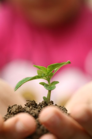 Seedlings in the hands of a girl image Stock Photo - 7083314