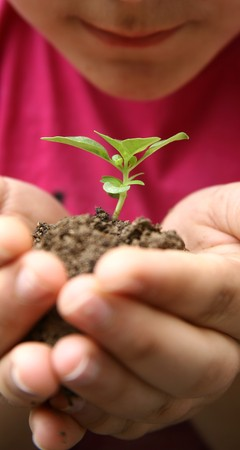 Seedlings in the hands of a girl image photo