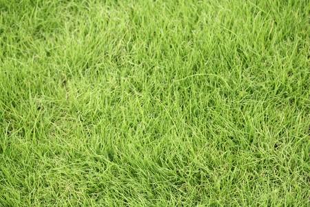 grass background Stock Photo - 7335906