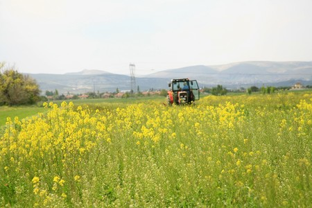 The potato in the field blossoms background photo
