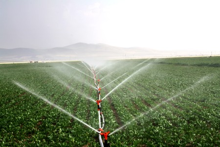 Drip irrigation systems in an agricultural field image Banco de Imagens