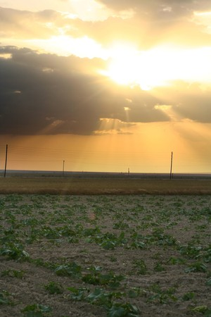 Sunset over field with green grass Stock Photo - 7335680
