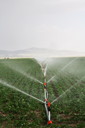 Irrigation sprinklers water a farm field against late afternoon sun  Stock Photo