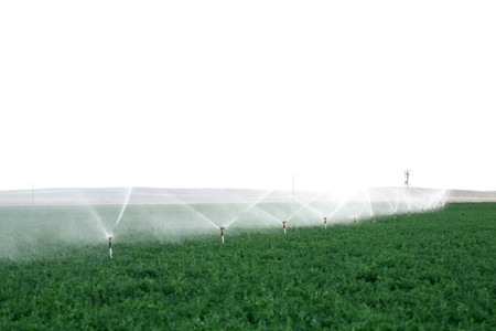 pivotal: Irrigation sprinklers water a farm field against late afternoon sun  Stock Photo
