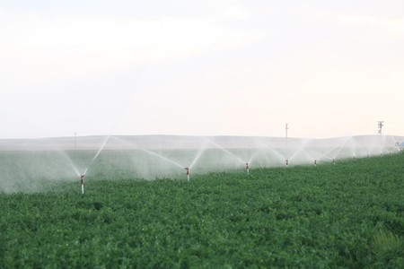 pivotal: Irrigation sprinklers water a farm field against late afternoon sun