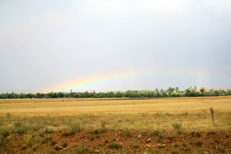 occurring: Rainbow after the rain occurring in wheat field Stock Photo