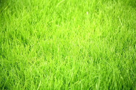 grass background Stock Photo - 7585551