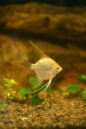cute little fish in an aquarium  photo