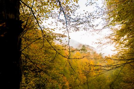 Autumn landscape image