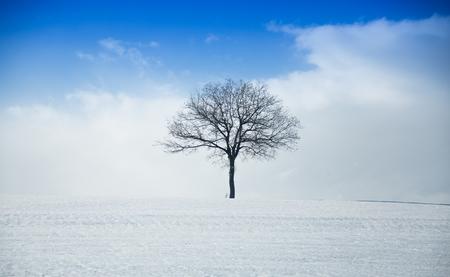 reason: Alone tree in a field, winter season. Stock Photo
