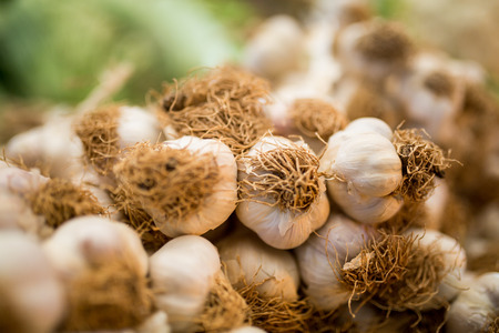 garlic bulbs with garlic cloves Stock Photo