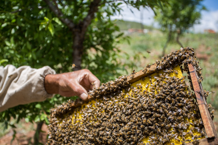 make honey production Stock Photo