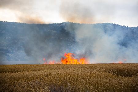 burning field crops