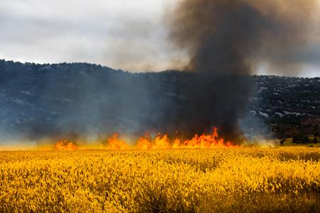Open burning fire in the field