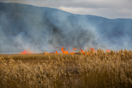 burning field photo Foto de archivo