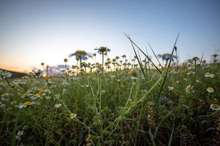landscapes in the spring Banco de Imagens