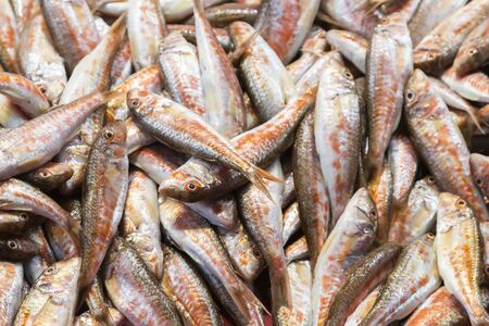 Fish market in istanbul, Turkey 스톡 콘텐츠