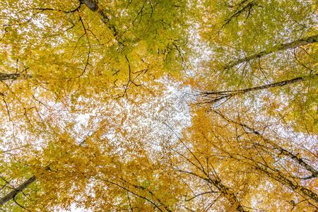 Autumn tree with leaves lying down in the sky, Bolu, Turkey